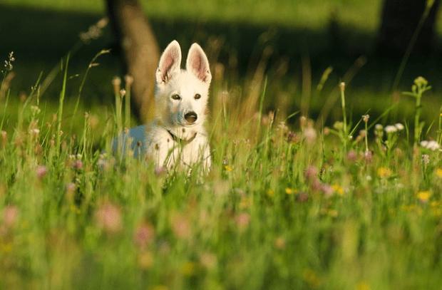 собаки, рак, пет-терапия