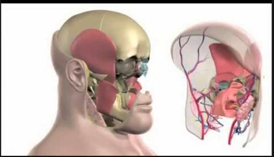 пересадка лица, трансплантация