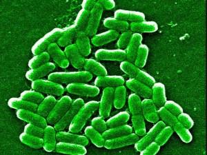 аппетит, микробиом