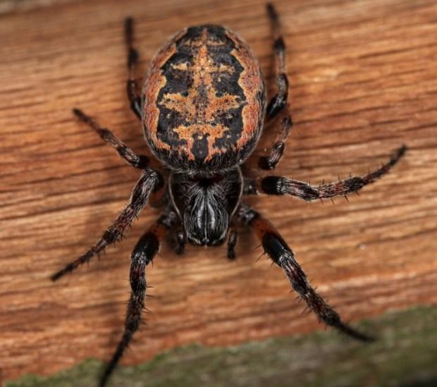 страх, пауки, арахнофобия, пропранолол, бета-блокаторы