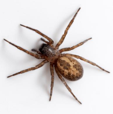 боязнь пауков, Арахнофобия, Biological Psychology