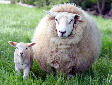 удобрения, беременность, Nature Scientific Reports