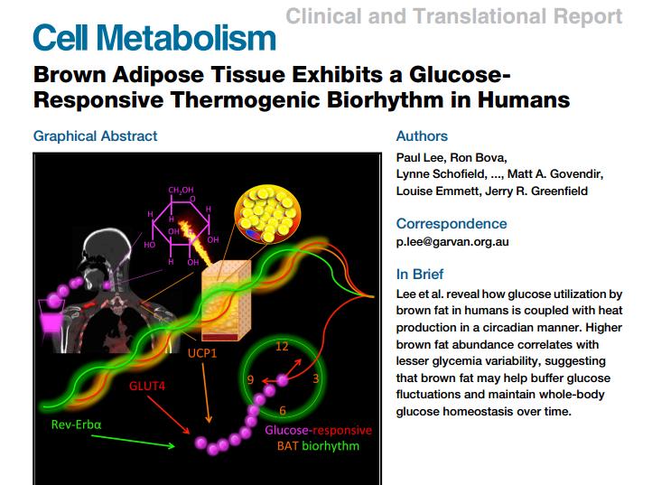 Cell Metabolism, бурый жир, тепло, утро