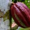 какао, морщины, Journal of Cosmetic Dermatology