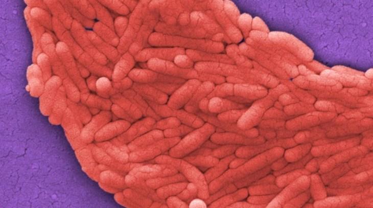 антибиотики, кишечная микрофлора,