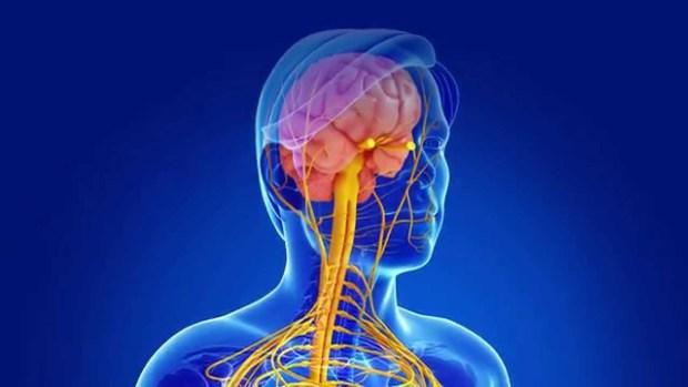 рассеянный склероз, мутация, ген, Neuron