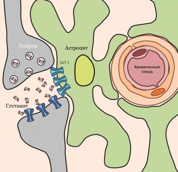 Токсоплазма, кошка, головной мозг, PLoS Pathogens.
