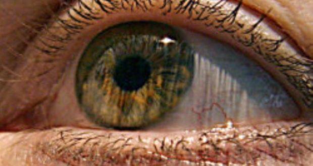 глаз, сетчатка