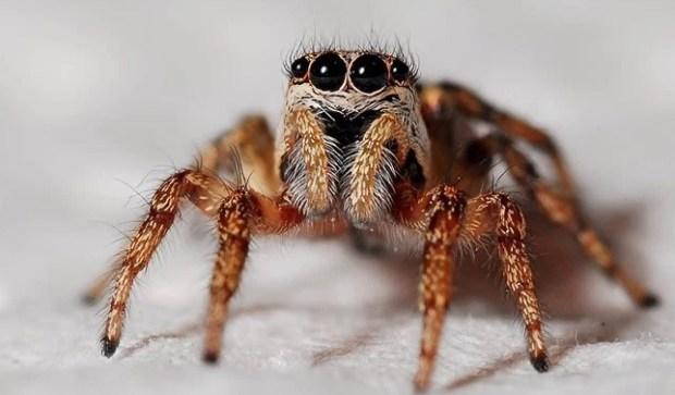 Current Biology, пауки, арахнофобия