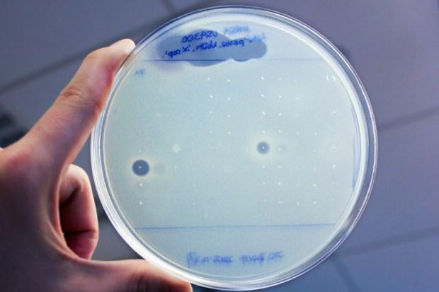 антибиотик, супербактерия, гумимицин