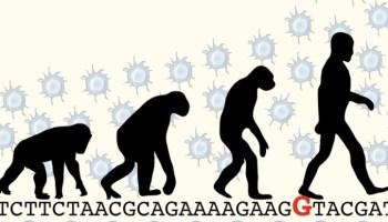 мутация, головной мозг, неокортекс