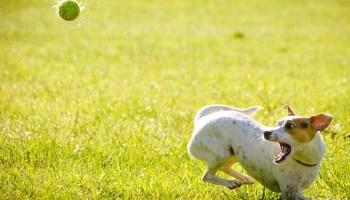 собаки, физическая активность
