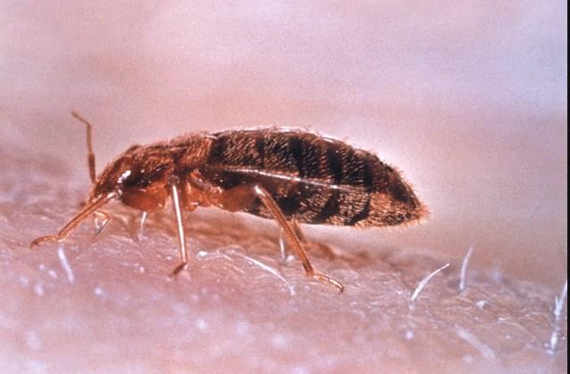 Аллергия, пылевые клещи