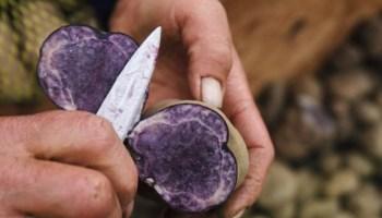 фиолетовый картофель, рак толстой кишки