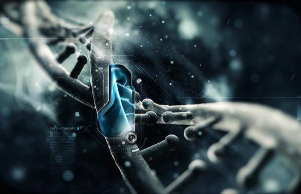 гены, продолжительность жизни