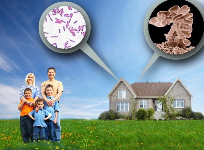 домашние микробы,