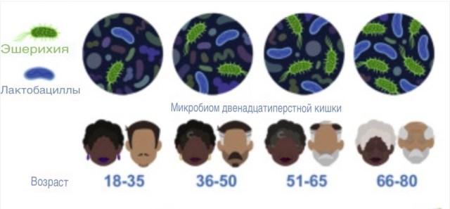 Возраст и старение оказывают решающее влияние на микробиом кишечника
