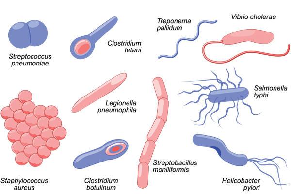 MORPHOLOGICAL CLASSIFICATION