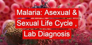 Malaria: Asexual & Sexual Life Cycle , Laboratory Diagnosis