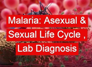 Malaria: Asexual & Sexual Life Cycle , Laboratory Diagnosis