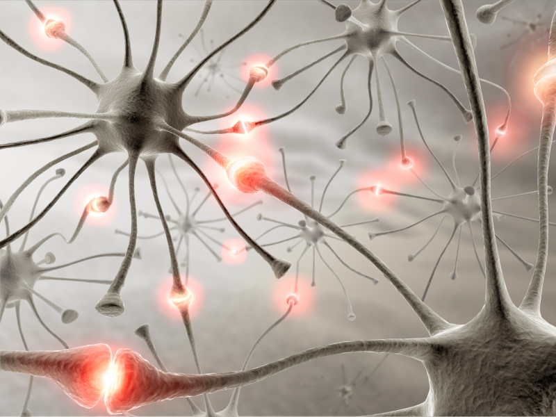 Neurons-seizures
