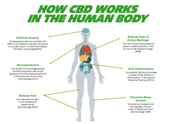 How CBD works