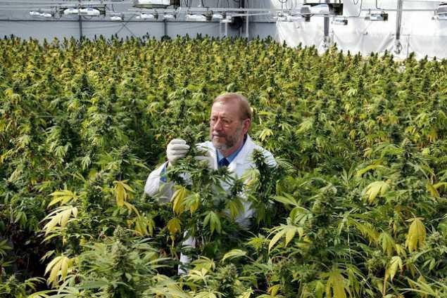 UK Largest Producer of Medical Cannabis in World yet Still Denies Access to Citizens