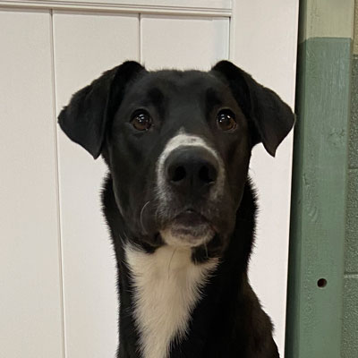 Vern dog in training headshot