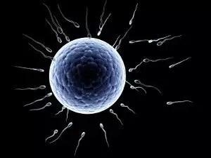 phthalates and infertility