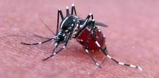 zika-virus-transmission
