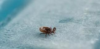 lyme disease diagnosed at an early stage
