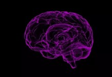 amyloid plaques in the brain