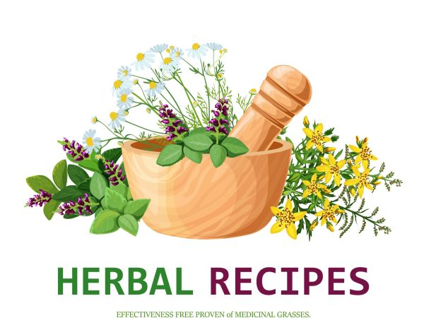 Medicinal Plants 15 Herbs to Boost your Health