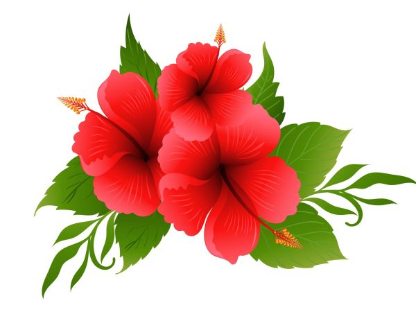 Hibiscus for Healthy Hair – 5 Ways to Use Hibiscus