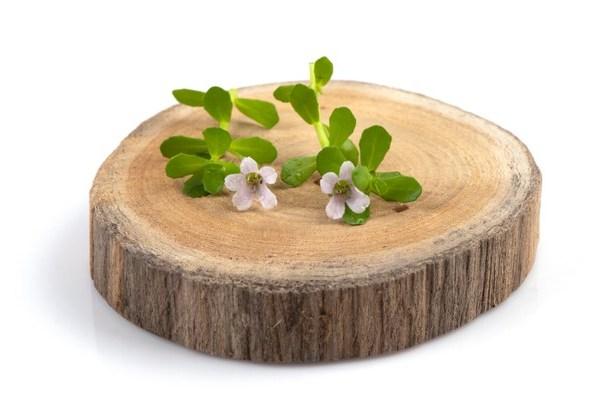 Brahmi – Benefits, Uses, Precautions, Side Effects
