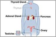 Medical Terminology Quiz: Endocrine System