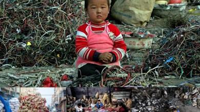 Photo of النفايات الإلكترونية في غوييو- الصين