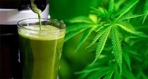 cannabis juice