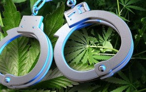 cannabis puta