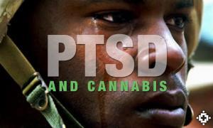 ptsdandcannabis