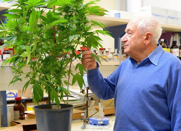 FOTO - www.medicann.sk