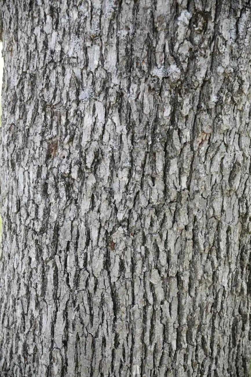 Supplements Trees Iron