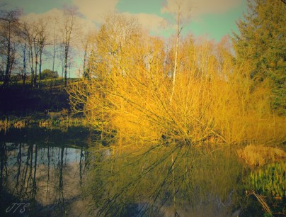reflections3