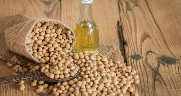 Соя - лечебные свойства и применение в народной медицине