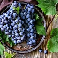 Виноград - полезные свойства и применение в народной медицине