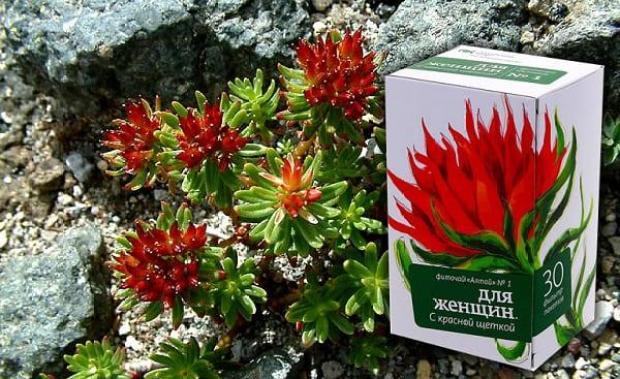 Красная щетка - лечебные свойства и применение в медицине
