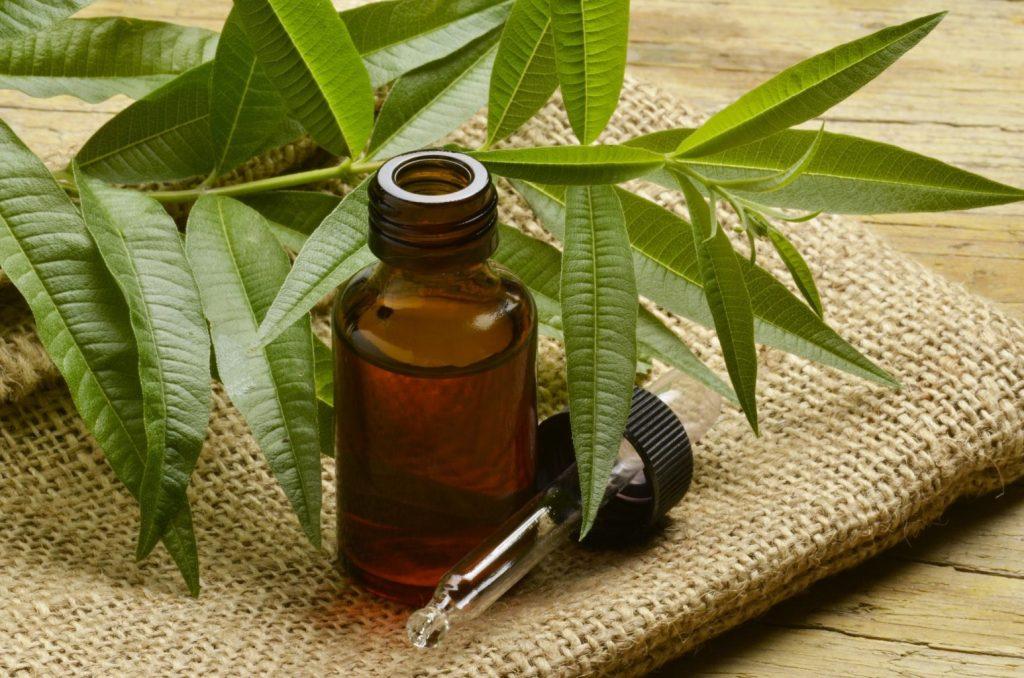 Масло чайного дерева - состав, лечебные свойства и применение