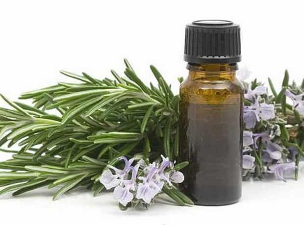 Туя - лечебные свойства и применение в народной медицине