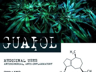 Terpene Tuesday: Guaiol