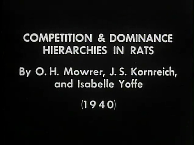 Title screen of Competition and Dominance Hierarchies in Rats, 1940.